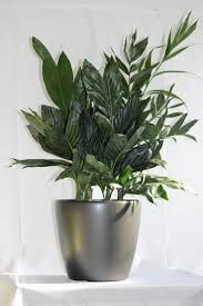 45 best indoor office plants flowers and care images on pinterest
