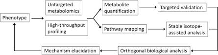 the analytical process to search for metabolomics biomarkers
