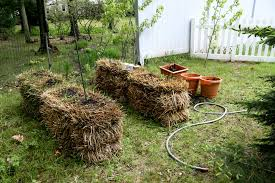 straw bale gardening pictures u0026 ponderings