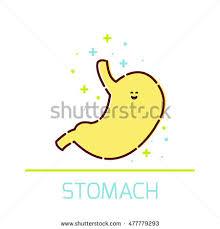 Cartoon Human Anatomy Cute Healthy Stomach Icon Made Cartoon Stock Vector 436056439