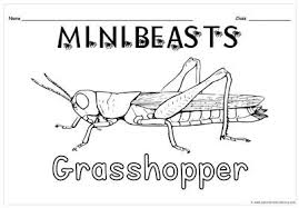 minibeasts colring sheets junior primary library