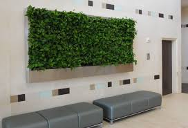 ways to use plants indoors