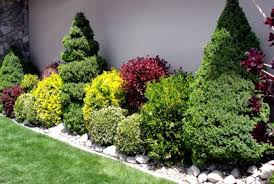 Shrub Garden Ideas Landscaping With Shrubs And Bushes Photos And Design Ideas