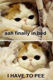 Omg Cat Meme - omg humor facebook