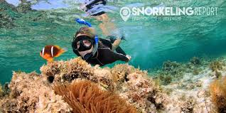 snorkeling images What is snorkeling jpg
