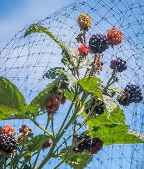 bird x protectve netting fruits u0026 veg garden helpers at burpee com