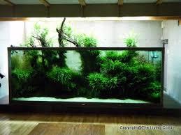 Takashi Amano Aquascaping Techniques 337 Best Nature Aquarium Images On Pinterest Aquarium Ideas