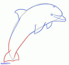 simple dolphin drawing how to draw a jumping dolphin step step sea