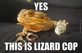 Lizard Toast Meme - serve memes best collection of funny serve pictures