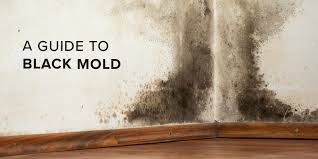 the truth about black mold u2014and how you can stay safe safewise