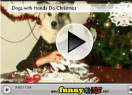 funny christmas video how dogs with hands prepair for xmas