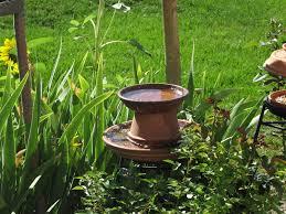 bird feeds that have graced my garden