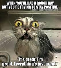 Tuesday Funny Memes - pin by paula bosarge joe on beautiful animals pinterest memes