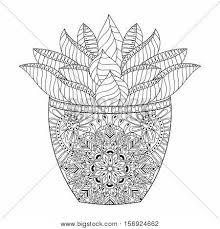 zentangle succulent cactus vector vector u0026 photo bigstock