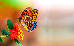 cuttest butterfly on the flower wallpapers media file