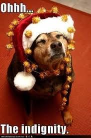 Christmas Dog Meme - puppy christmas meme christmas best of the funny meme