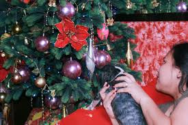 Christmas Ornaments Dogs How To Keep Your Dog Safe Around Christmas Decorations 8 Steps