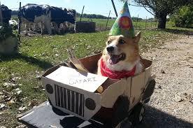 Corgi Birthday Meme - this corgi had the best birthday party ever