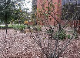 native plant finder harriet a korfhage native plant garden u2014 department of biology
