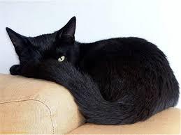black friday pet adoption southampton animal shelter presents black friday adopt an