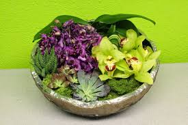 flower shops in las vegas fresh orchids and potted succulents with moss assortment an