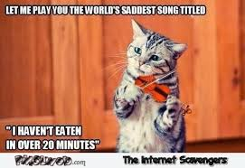 Song Meme - cat playing the saddest song funny meme pmslweb