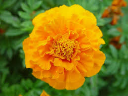 List Of Flowers by The Language Of Flowers