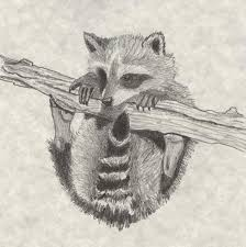 drawn raccoon racoon pencil and in color drawn raccoon racoon