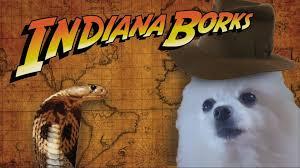 Lost Dog Meme - indiana borks youtube