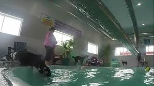 inside the bubble puppy pool house