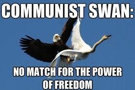 Murica Meme - communist swan funny murica meme