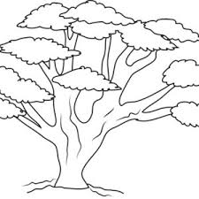 oak tree coloring oak tree coloring