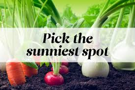 grow vegetatables plant the perfect vegetable garden reader u0027s