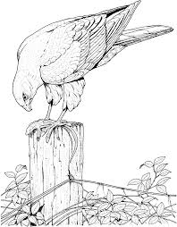 mockingbird inspirational realistic bird coloring pages coloring