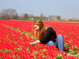 tulips galore the famous dutch flower fields life in a state of