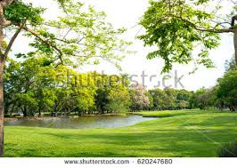 park stock images royalty free images vectors