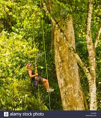 Treetop Canopy Tours by Canopy Tour Stock Photos U0026 Canopy Tour Stock Images Alamy