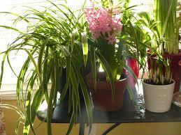 garden table top garden for beautiful interior table