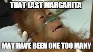 Margarita Meme - sick monkey imgflip