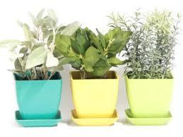 growing herbs indoors under lights growing herbs indoors image titled grow herbs indoors under lights
