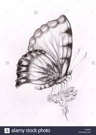 butterfly with flower original draw white background stock