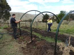 building a pumpkin trellis update tiger hill permaculture