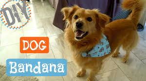 diy bandana for dogs