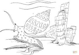sea snail coloring free printable coloring pages