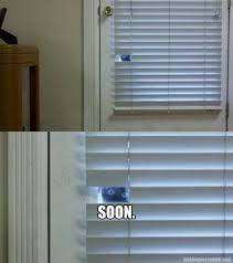 Soon Cat Meme - soon cat memes and comics