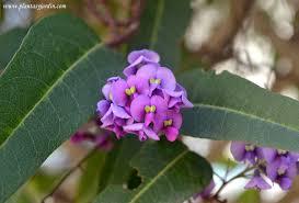 pin by estrenocasa on 20 plantas trepadoras con flor que debes
