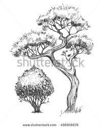 trees set sketch illustration vector stock vector 486916876