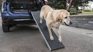 is nissan u0027s rogue dogue a good place to put dogs or a dog prison