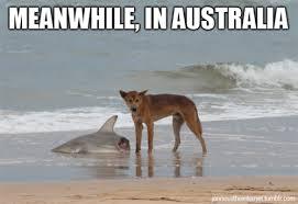 Australian Memes - dangerous australian memes image memes at relatably com
