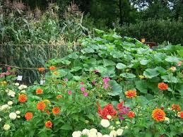 What Type Of Soil For Vegetable Garden - biodiversity in vegetable gardens ipmopedia